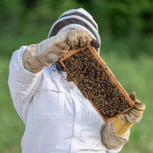 Nous allons voir les 3 causes principales de la disparition des abeilles. Néanmoins, nous ne pouvons ni préciser, ni quantifier, ni classer, l'importance de chaque cause sur l'effet de disparition puisqu'à ce jour, nous ne pouvons pas réellement quantifier ces effets.